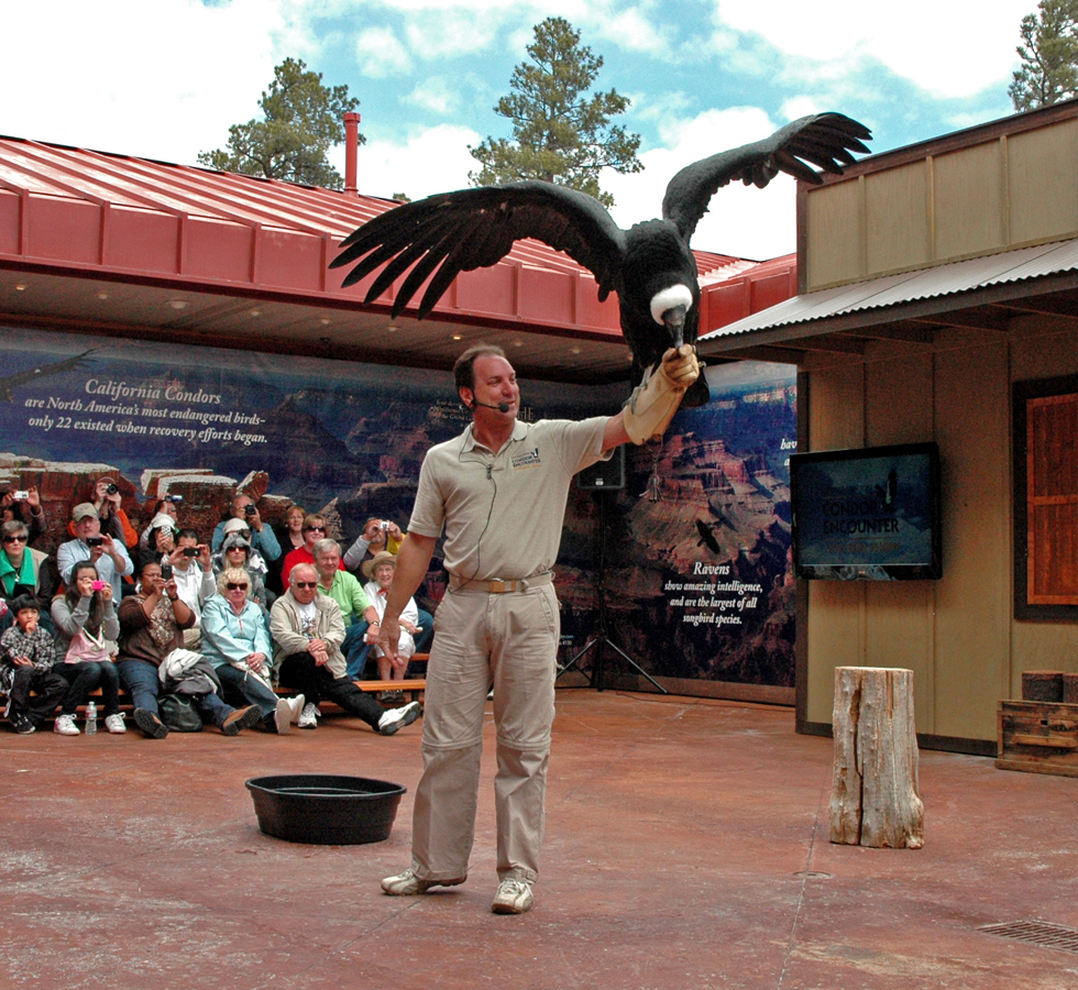 Grand Canyon Condor Live Bird Show