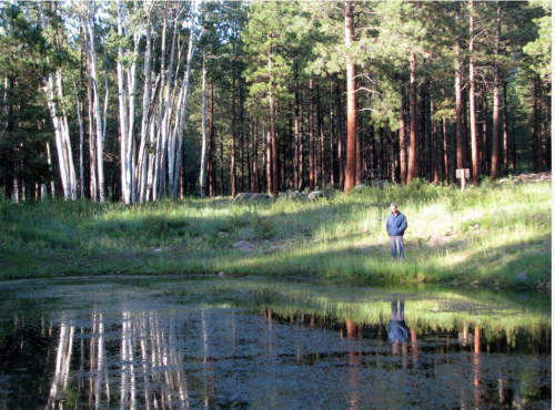 Pamela Tait   Kendrick Mountain Trail