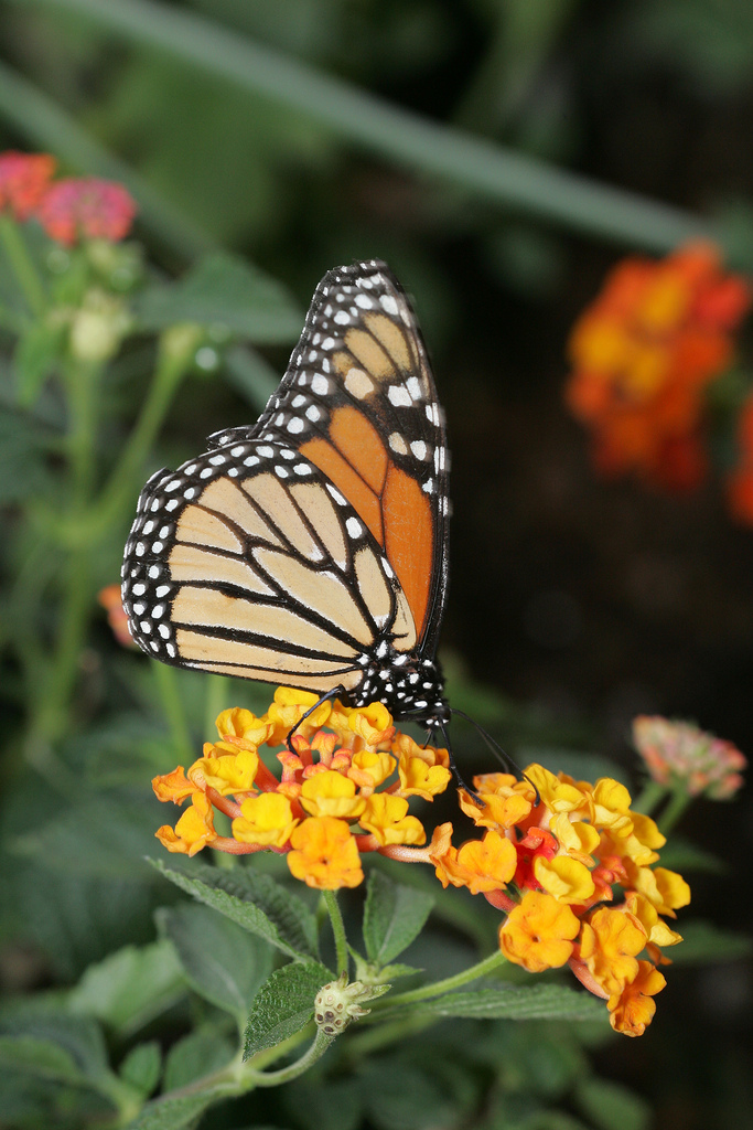 Spring Into March At The Desert Botanical Garden Butterfly Exhibit Arizona Highways