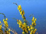 Bob Dennin | Lynx Lake