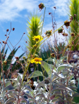 Miachelle DePiano | Desert Botanical Garden