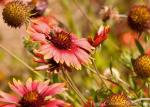 Peggy Coleman | Desert Botanical Garden