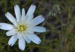 Sandra Davis Stroshine | Saguaro National Park
