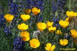 Susan Kordish | Catalina State Park