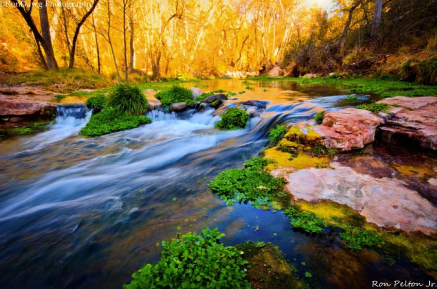 Ron Pelton Jr | Fossil Creek