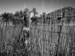 Betsy Batish | Aravaica
