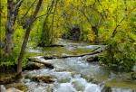 Bob Miller | Fossil Creek