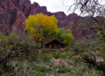 Gaelyn Olmsted | Phantom Ranch