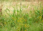 Wendy Dunham | Sonoita