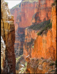 Betsy Batish Photography | North Kaibab trail