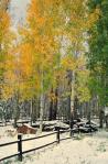 Kathleen Wasselle Croft | Snowbowl trail