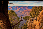 Tim Van Den Berg | Grand Canyon