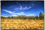 Cheyenne L Rouse | Flagstaff
