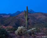 Ron Pelton Jr | Four Peaks