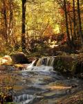 Jody M Tanner | Horton Creek