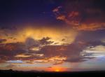 Steve Ellis | Tucson
