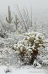 Bob Miller | Saguaro National Park