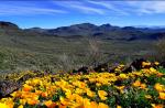 Debbie Filleman Detherage | Black Hills