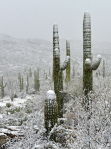 Jack Challem | Saguaro National Park East