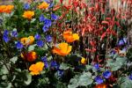 Teresa Howell | Desert Botanical Garden