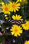 Valerie Millett | Botanical Gardens