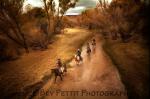 Bev Pettit | Kirkland Creek