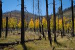 Bob Miller | Hart Prairie, Flagstaff