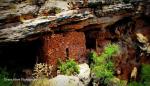 Dyana Muse | Sinagua Ruins, Camp Verde