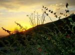Andrea Busby | Mt. Lemmon
