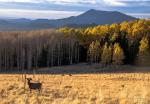 Andrew Kopolow | Flagstaff