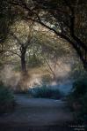 Andrew Kopolow | Gilbert Riperian Preserve