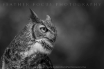Feather Focus Photography | Gilbert