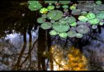 Jim Lindstrom | Boyce Thompson Arboretum