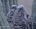 Jody M. Tanner | Sonoran Desert Preserve