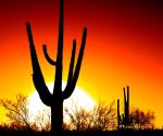 Karen Seargeant | Tucson