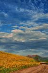 Kathleen Wasselle Croft | near Flagstaff