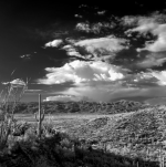 Michael McNulty | Saguaro National Park E