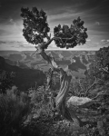 Nick Koziupa | Grand Canyon