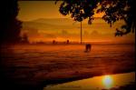 Rafter M Horses | Camp Verde