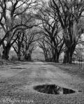Rebecca Wilks | Skull Valley