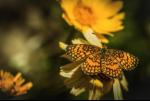 Shannon Myers | Boyce Thompson Arboretum