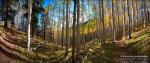 Reid Helms | Inner Basin Trail, SF Peaks