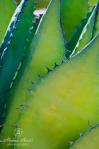 Alaina Ann Photography | Tucson