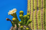 David Creech | Saguaro National Park