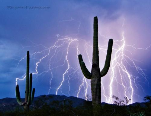 Greg McCown   Saguaro National Park