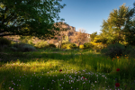 Jabon Eagar Photography | Boyce Thompson Arboretum