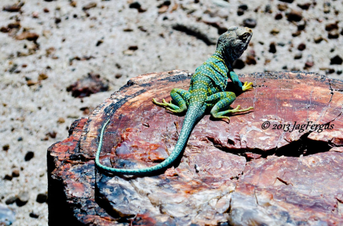Jag Fergus | Petrified Forest National Park