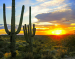 Lee Daniels | Tucson