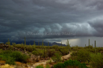 Rainshadow Images | Tucson