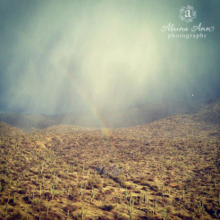 Alaina Ann Photography | Saguaro National Park